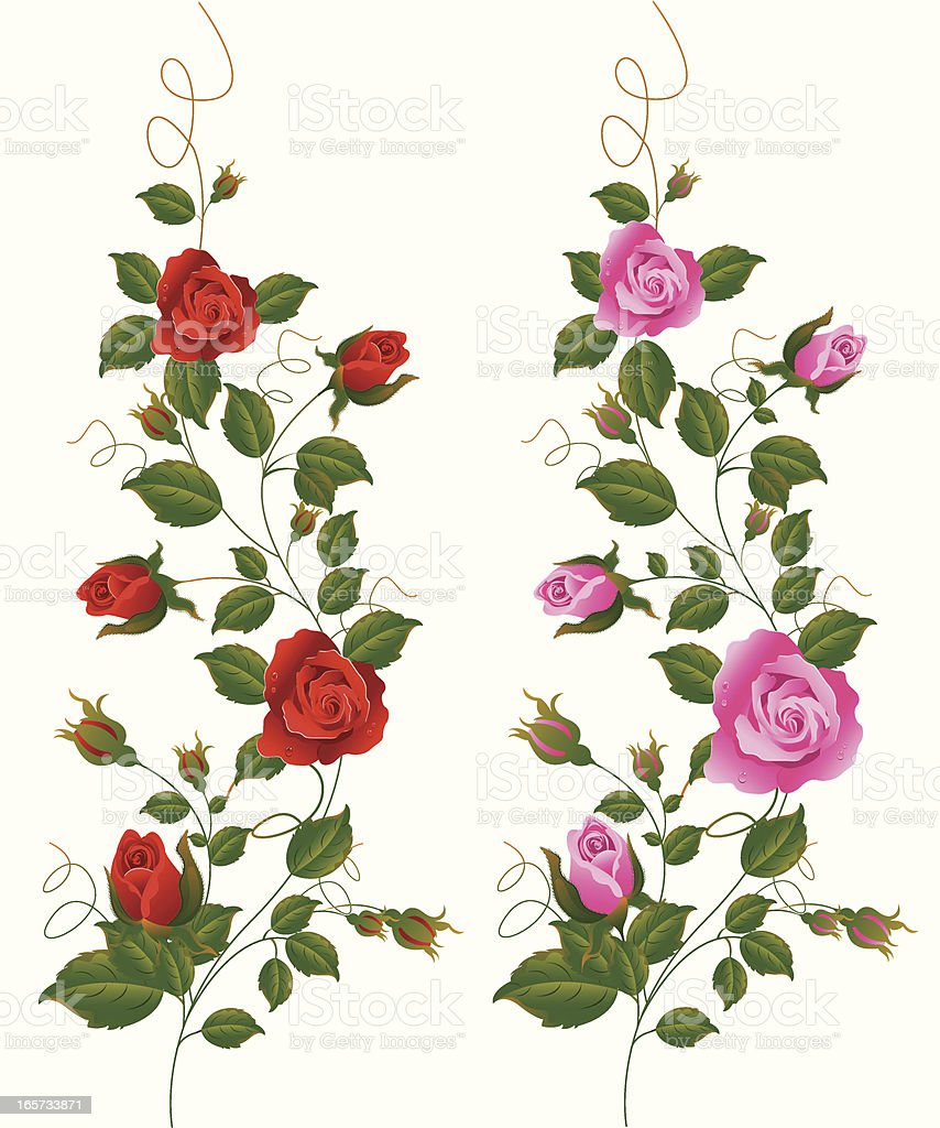 Rot und Rosa Rose Vine. – Vektorgrafik