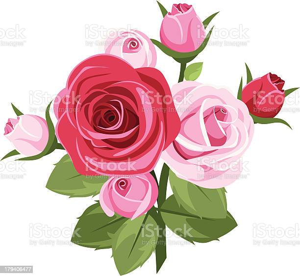 Red and pink roses vector illustration vector id179406477?b=1&k=6&m=179406477&s=612x612&h=toyjpkojoe7p u3zqsy1m1brydw1ea6l6hbvynxqxdy=