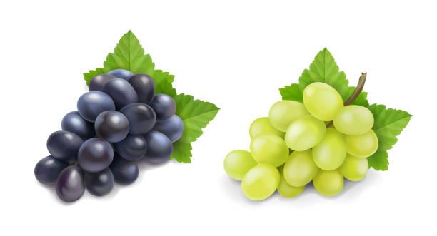 赤と白のテーブルブドウ。ワインブドウリアルな束ベクトルアイコンセット。 - ぶどう イラスト点のイラスト素材/クリップアート素材/マンガ素材/アイコン素材