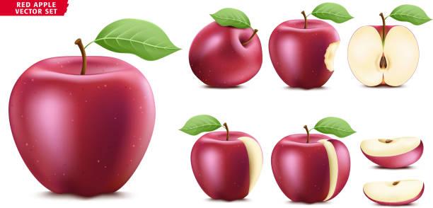 rote apfelfrucht reifen realistische 3d lebensmittel vektor set. ganze halb- und sliced-version - scheibe portion stock-grafiken, -clipart, -cartoons und -symbole
