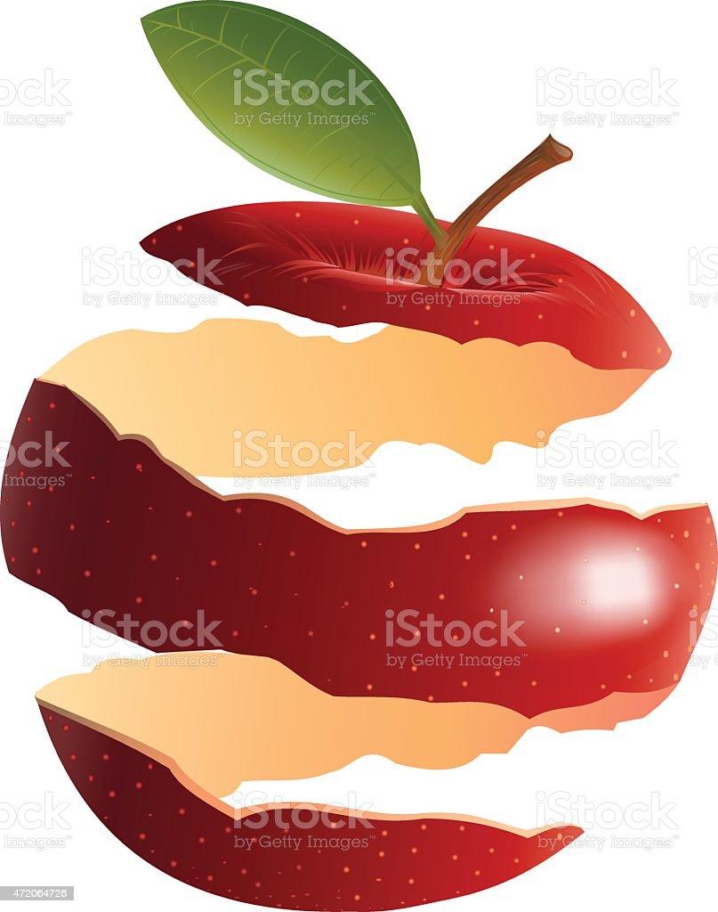 red apple peel vector art illustration