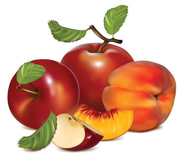 rote äpfel und reife pfirsiche. - nektarinenmarmelade stock-grafiken, -clipart, -cartoons und -symbole