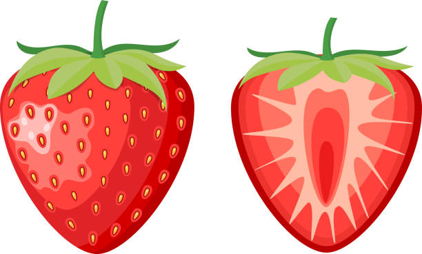 illustrazioni stock, clip art, cartoni animati e icone di tendenza di red berry strawberry and a half - fragole