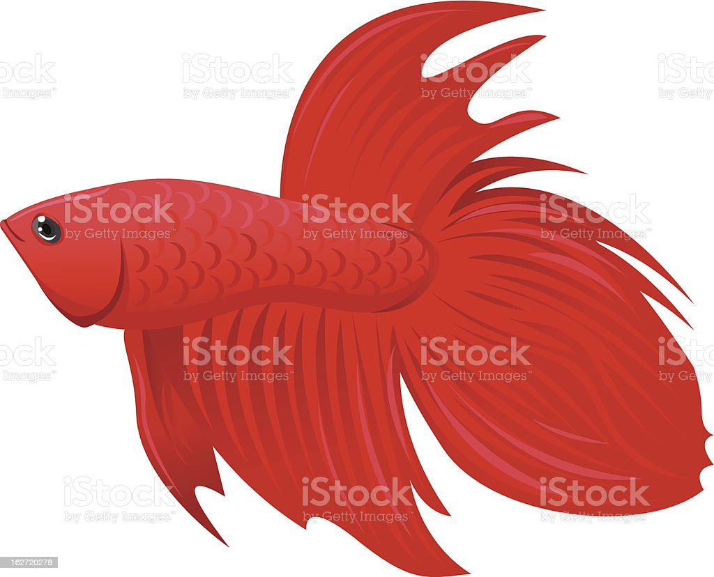 Red Betta Fish Stock Vector Art & More Images of Activity 162720278 ...