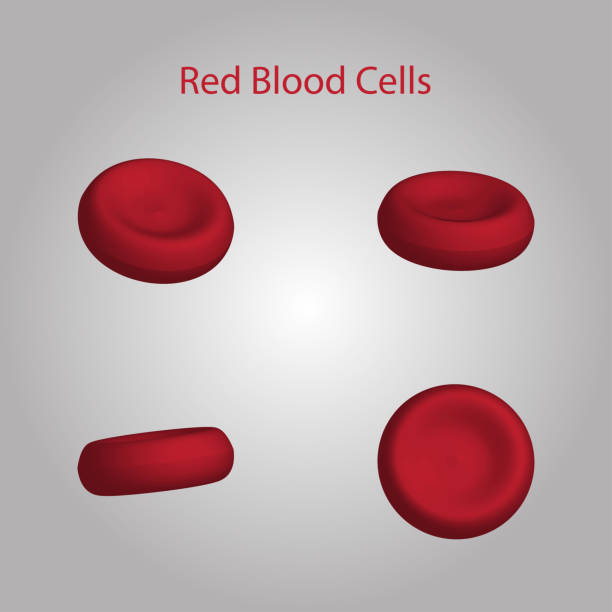 Red Blood Cells on Red Blood Cells on white background with shadow. Medical and health care concept. Vector illustration. red blood cell stock illustrations