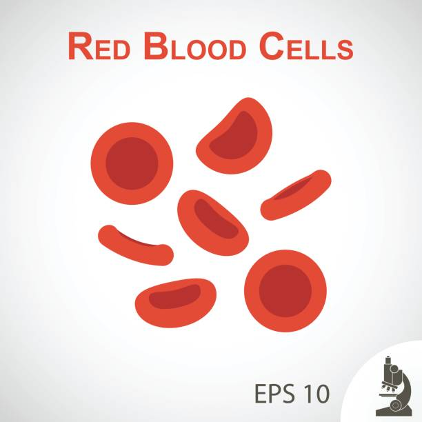 Red blood cells ( flat design ) on vignette background vector art illustration