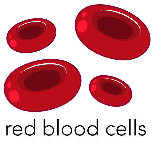 Red Blood Cells on White Background Red Blood Cells on White Background illustration red blood cell stock illustrations