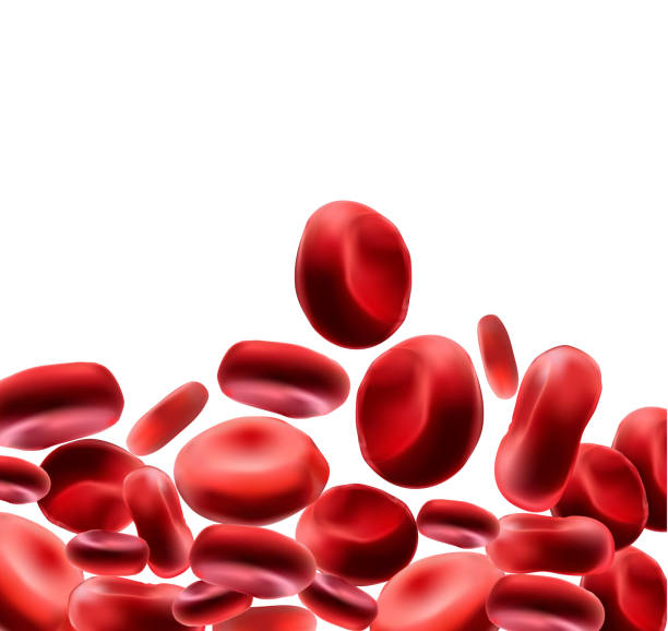 Red blood cells Use as a medical illustration is a 3d image and the word is written. Red blood cells Use as a medical illustration is a 3d image and the word is written. red blood cell stock illustrations