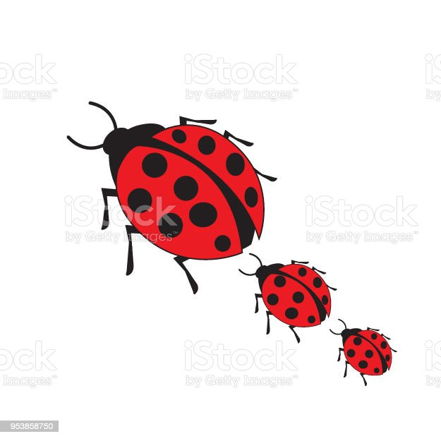 Red bug, isolated on white background. Red lady bug.