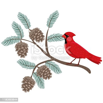 A red cardinal bird sits on a pine branch. vector image