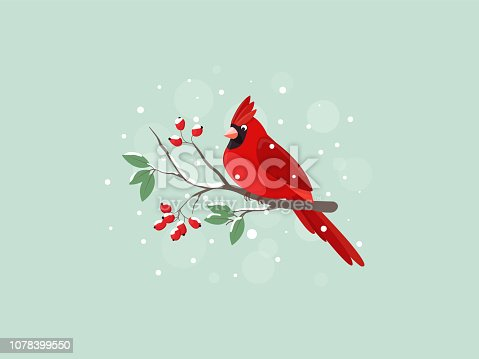 Red Cardinal bird sitting on mountain ash branch. Vector flat illustration.
