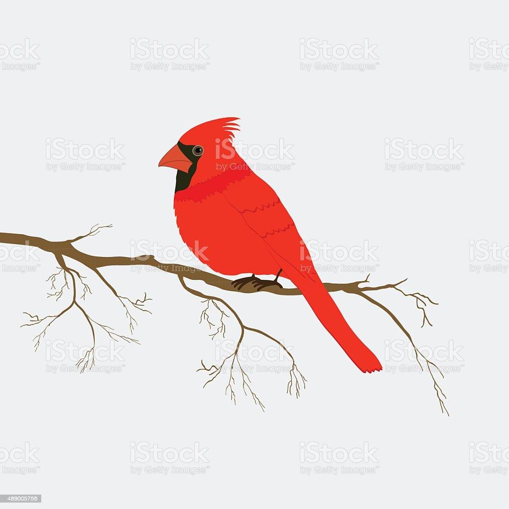 Royalty Free Cardinal Bird Clip Art, Vector Images