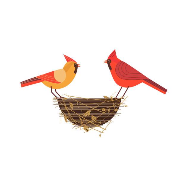 bildbanksillustrationer, clip art samt tecknat material och ikoner med röd kardinal fåglar par - bo