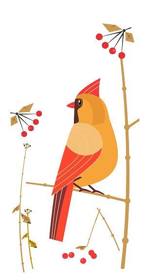 Red Cardinal Female siting on tree branch vector