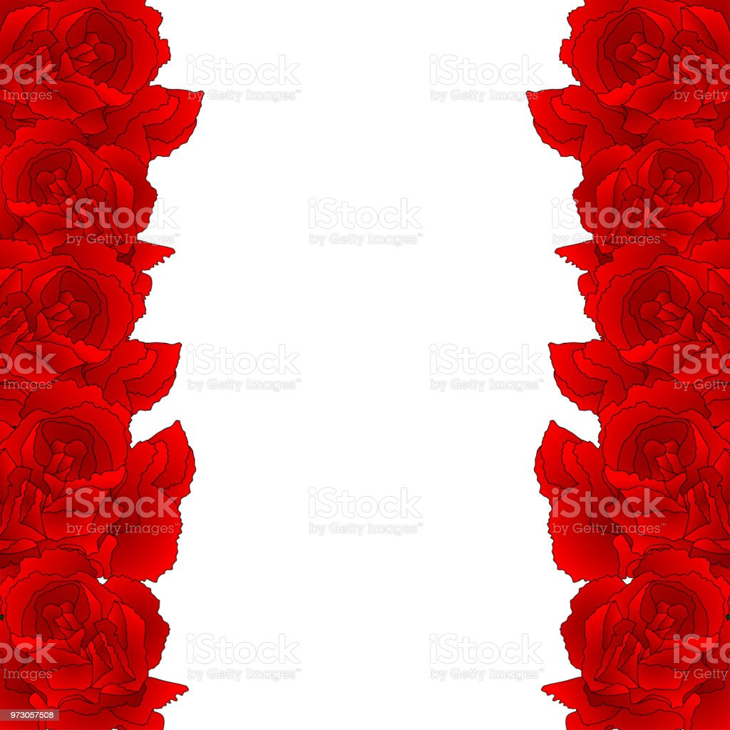 Red Carnation Flower Border, Dianthus caryophyllus vector art illustration