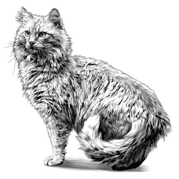 red cat stands tall with his tail between his legs – artystyczna grafika wektorowa