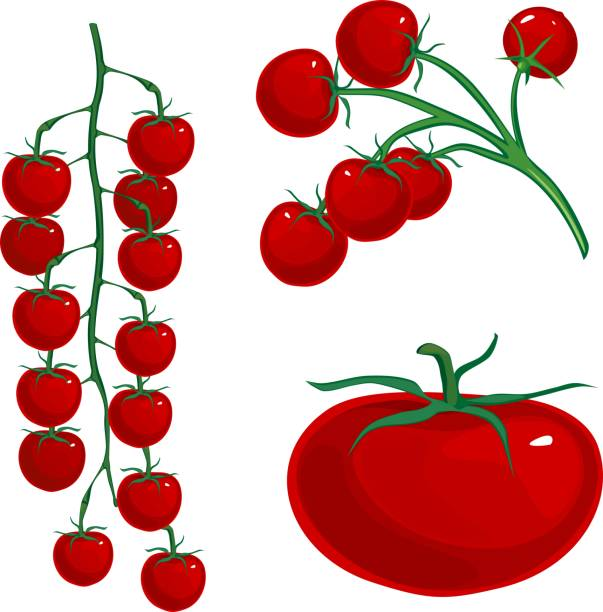 red cherry tomatoes on branch on white background - cherry tomato stock illustrations