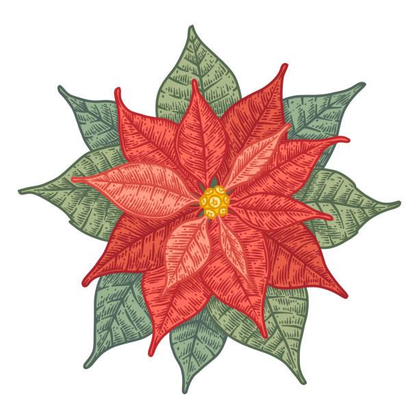a1410500d Top 60 Botanical Christmas Poinsettia Card Clip Art, Vector Graphics ...