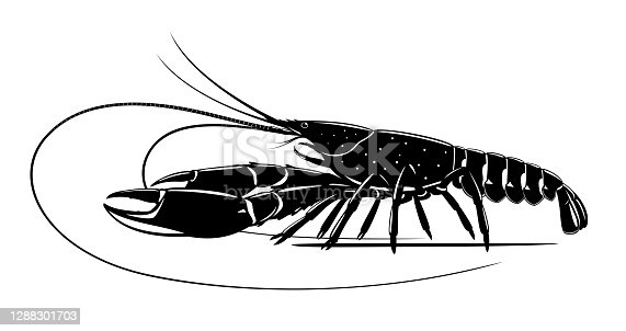 istock Red claw crayfish black and white 1288301703