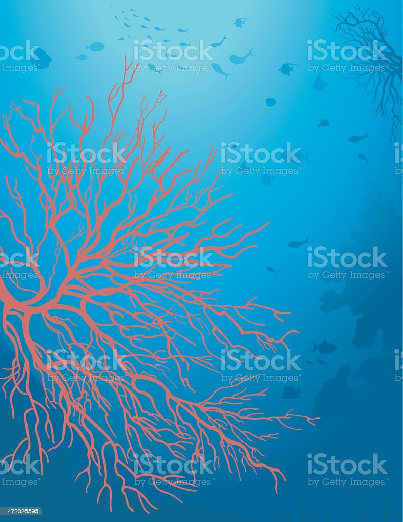 Red Coral / Corail Rouge vector art illustration