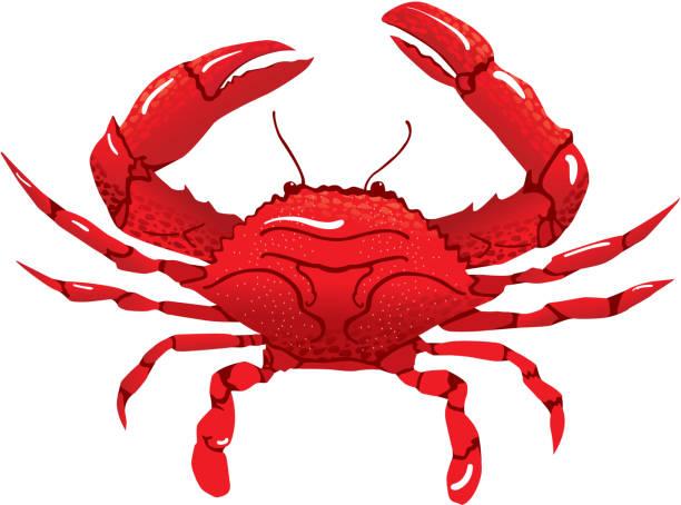 Red Crab vector art illustration