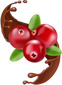 Red cranberry, splash of chocolate. Realistic forest berry illustration.