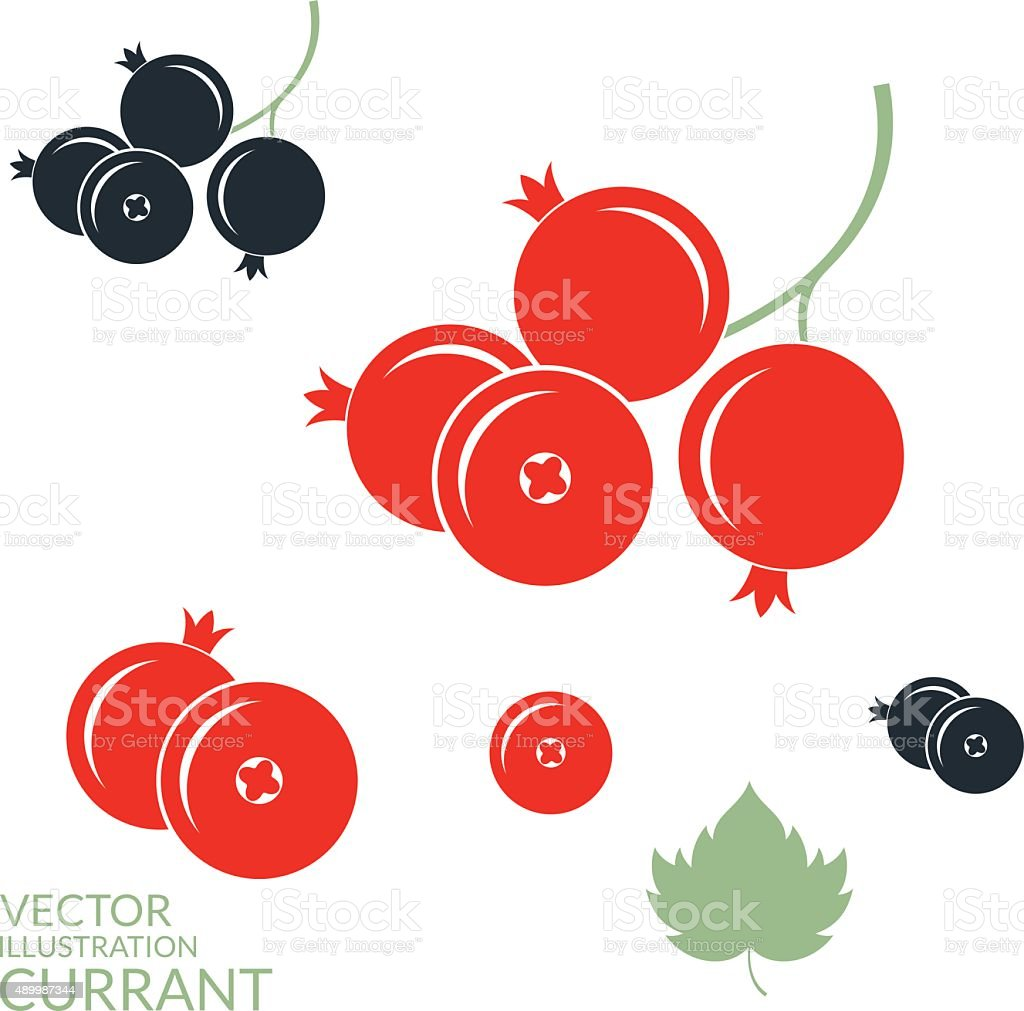 Red currant. Blackcurrant vector art illustration