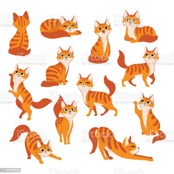 Red cute cat in different poses vector cartoon flat illustration vector id1152905328?b=1&k=6&m=1152905328&s=612x612&h=g8cilfdfxfuqbu6dnb02nxjtrn mb4uojfwqocgazns=
