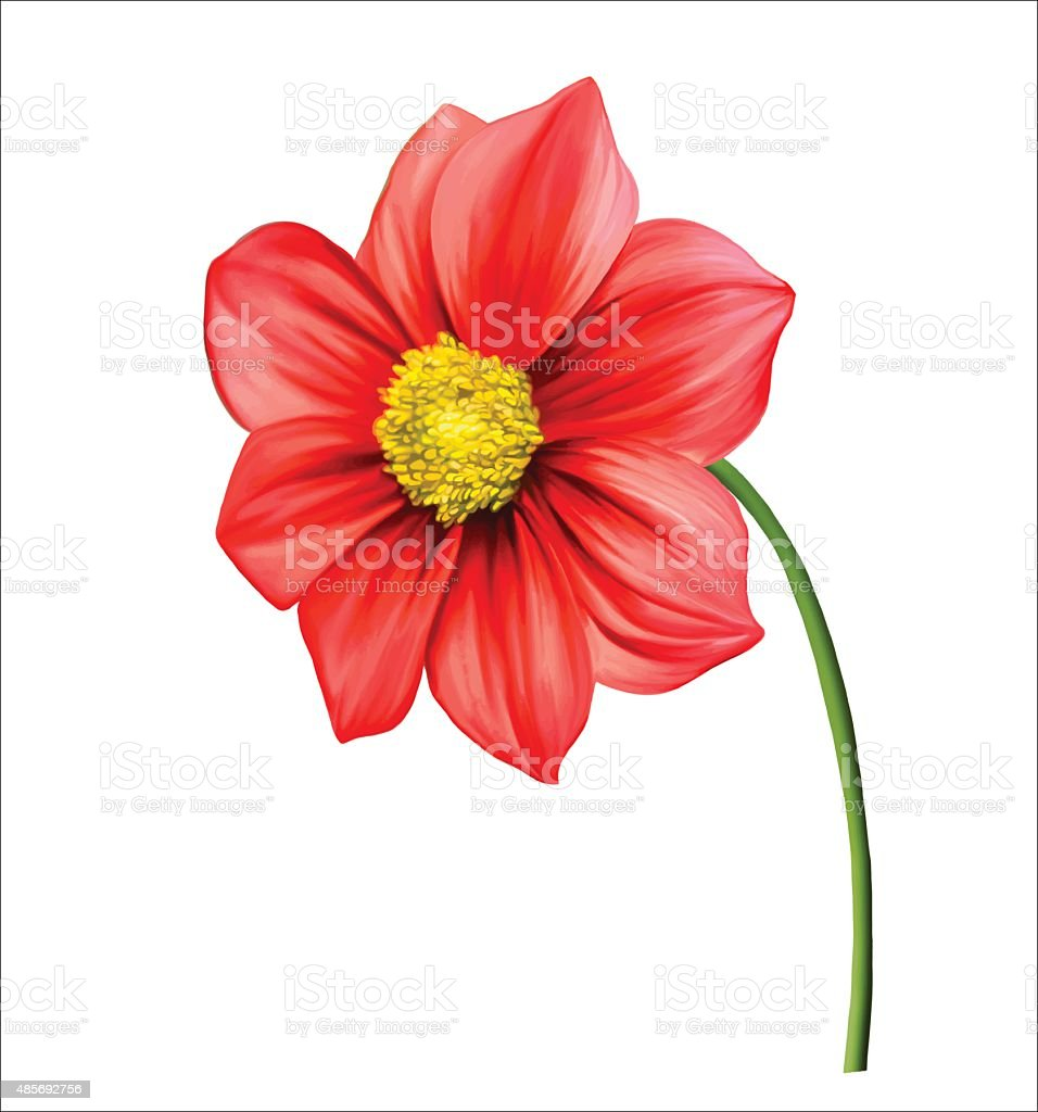 Red Dahlia Flower Vector Stock Vector Art More Images Of 2015