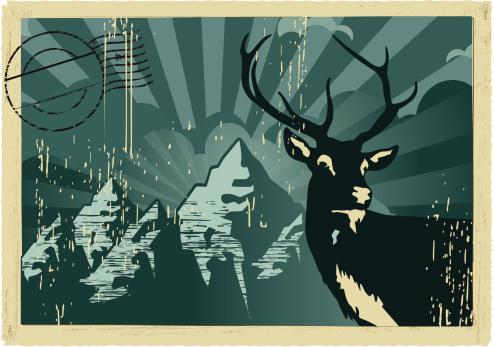 red deer vintage postcard