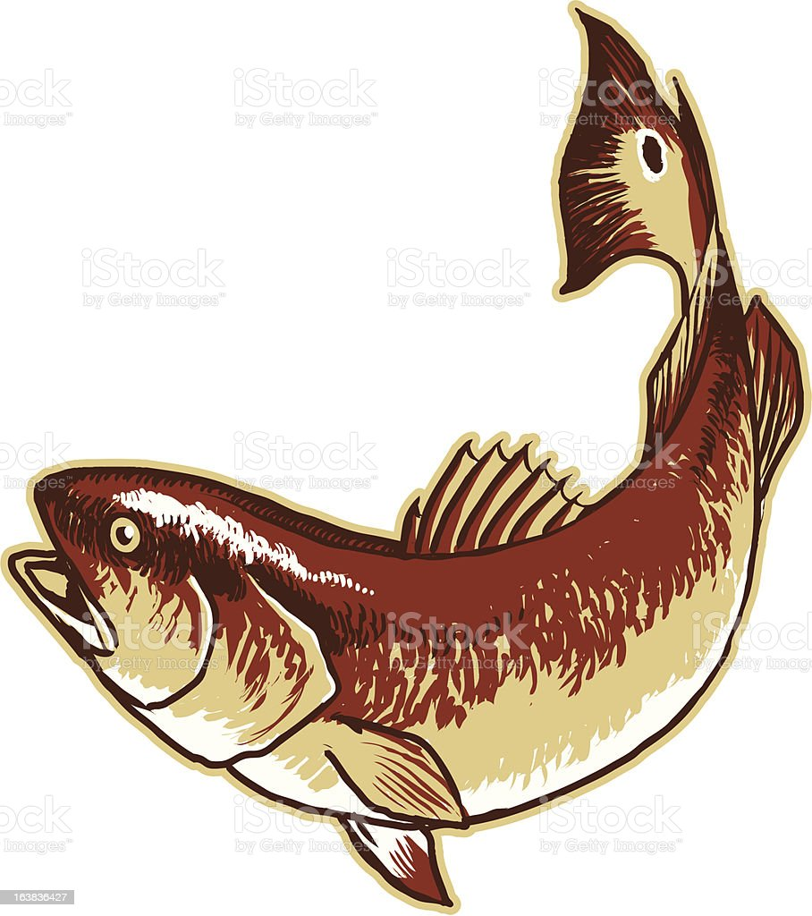 Red Drum vector art illustration