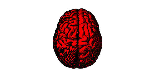 Red engraving brain drawing illustration isolated on white BG