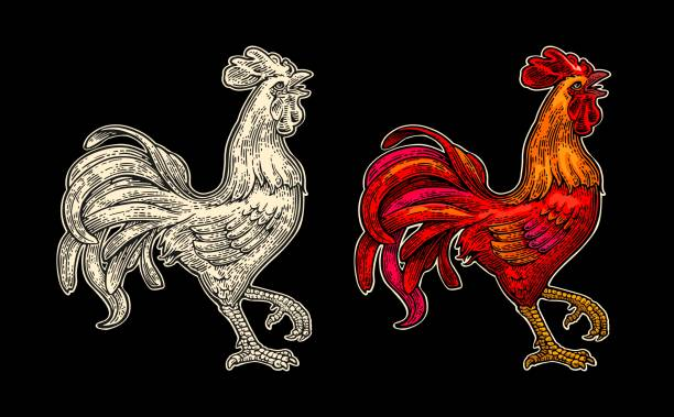 red fiery rooster. vintage black vector engraving illustration - rooster stock illustrations, clip art, cartoons, & icons