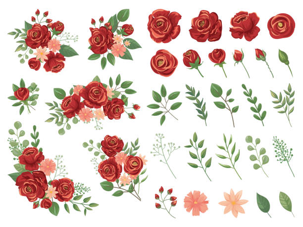 Red floral bouquet. Burgundy rose flower, vintage roses bouquets and spring flowers vector illustration set Red floral bouquet. Burgundy rose flower, vintage roses bouquets and spring flowers. Floral rose greenery elegant wedding greeting card. Cartoon vector illustration isolated icons set rose flower stock illustrations