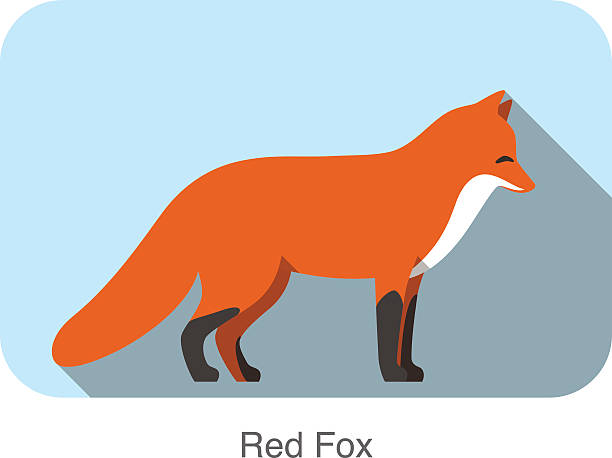 Red fox  standing  flat design Red fox cartoon standing, illustration vector silhouette of a howling coyote stock illustrations