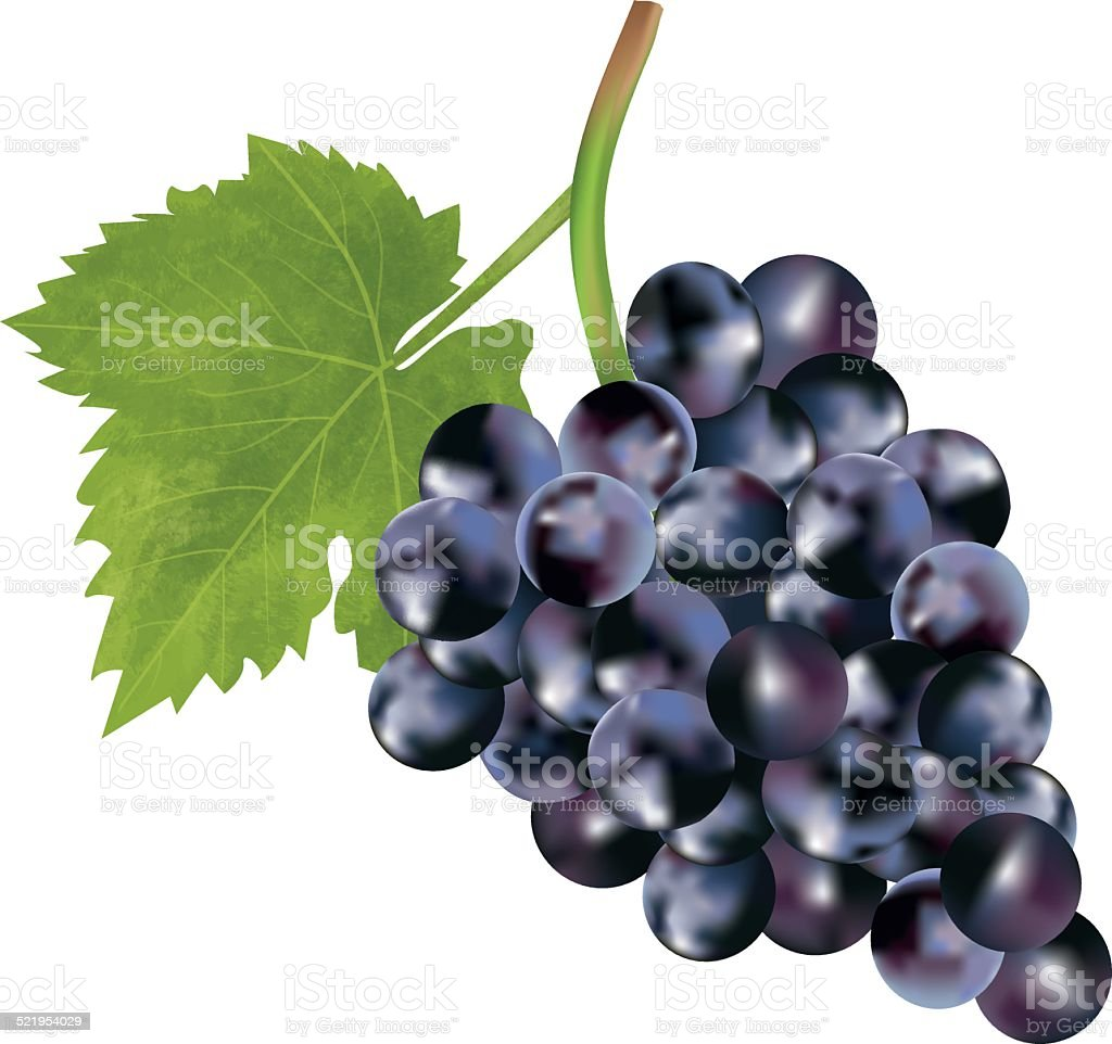 Red grape - Illustration vector art illustration