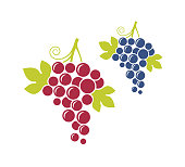 Red grapes and blue grapes. Fresh fruit with leaves on white background