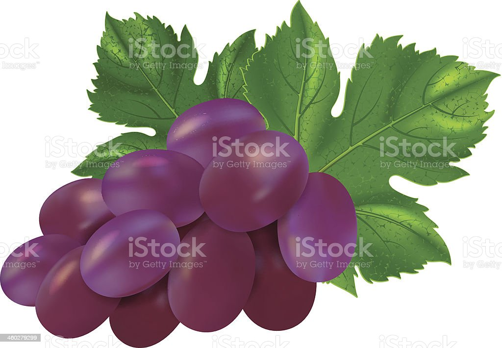 Red grapes royalty-free red grapes stock vector art & more images of berry