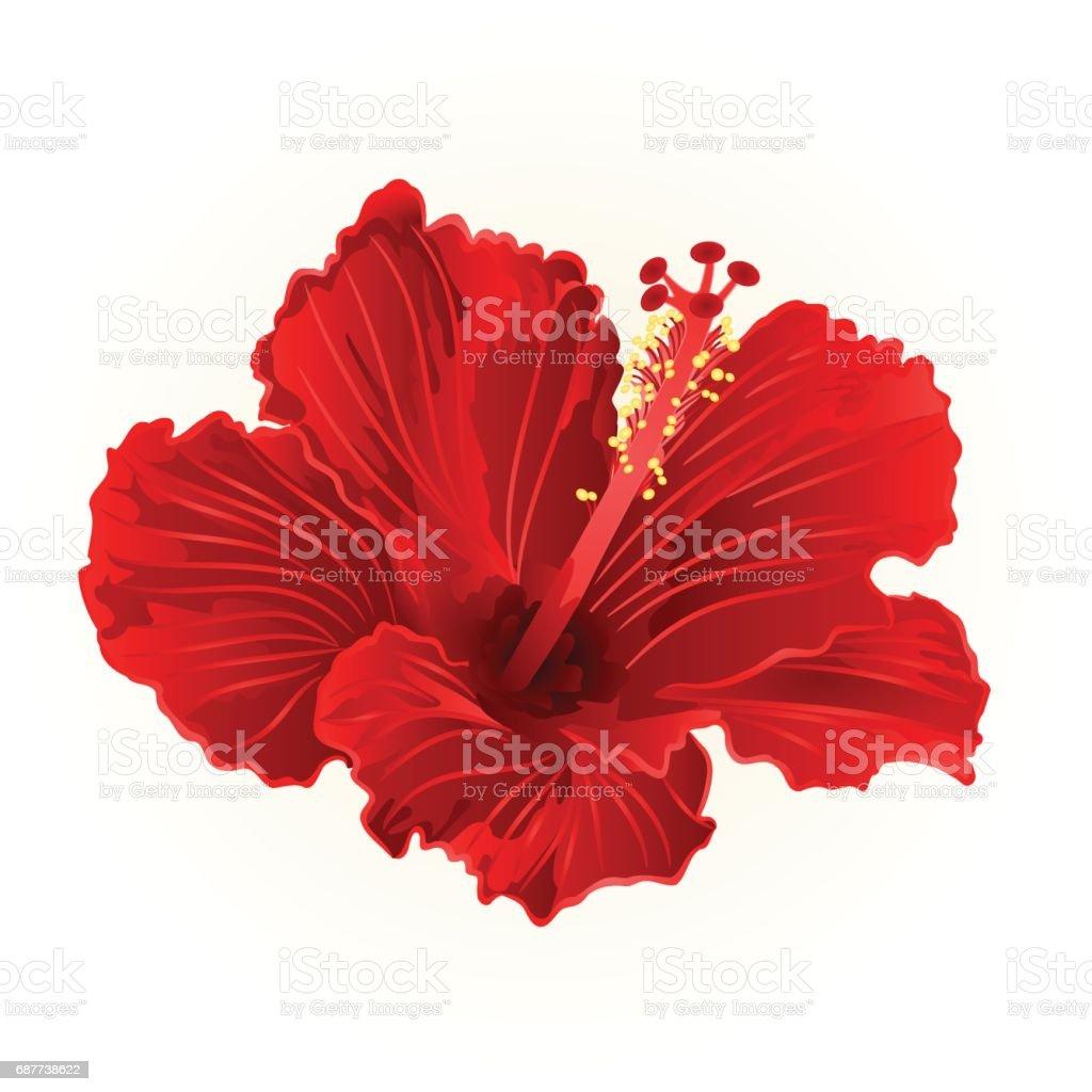 Hibiscus Rouge Simple Fleur Tropicale Vintage Part Dessiner Vector
