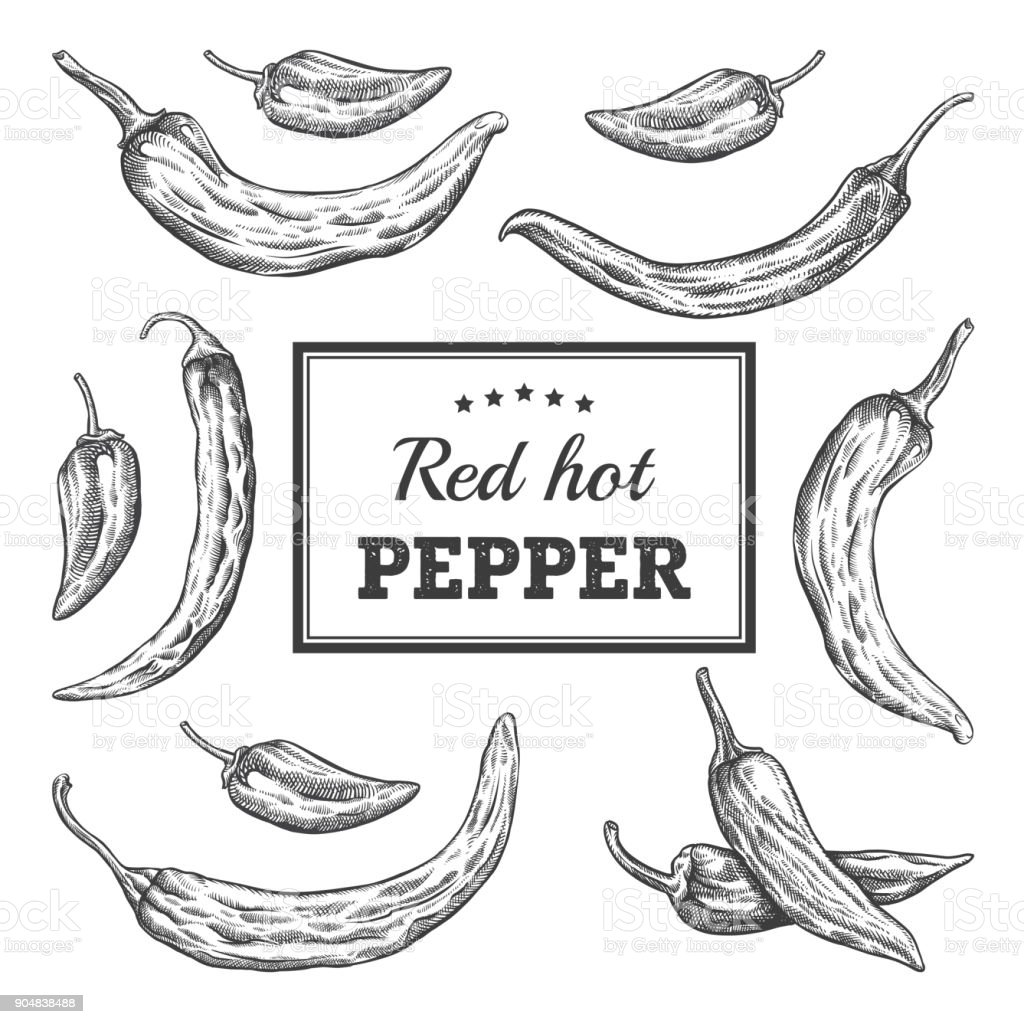 Red Hot Pepper pack engraving illustration vector art illustration