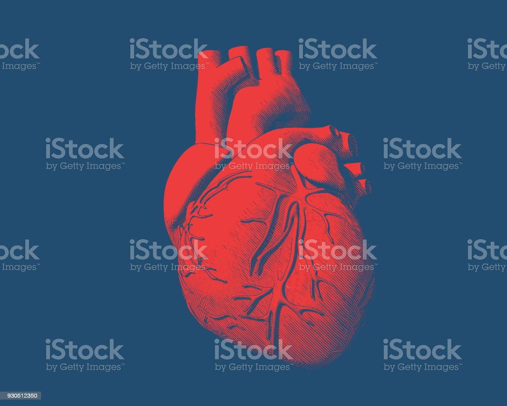 Red human heart drawing on blue BG - illustrazione arte vettoriale