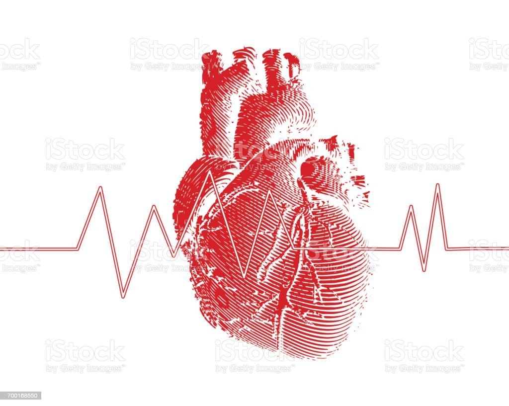 Red human heart with heart rate graph illustration vector art illustration