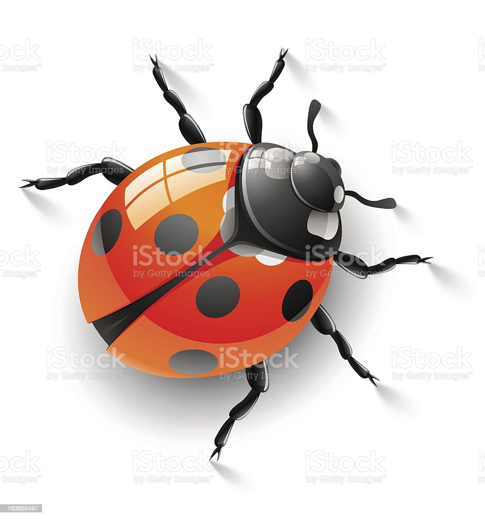 red ladybird royalty-free red ladybird stock vector art & more images of animal
