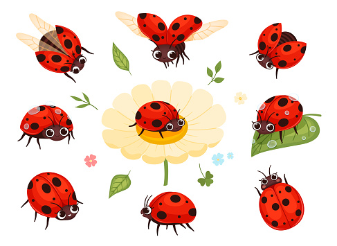 Red ladybugs. View nature bugs flying summer insects macro closing nowaday pictures collection isolated