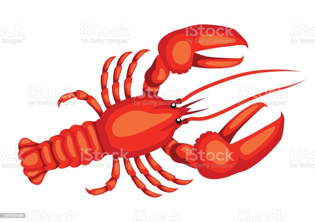 Red lobster. Isolated illustration of seafood on white background vector art illustration