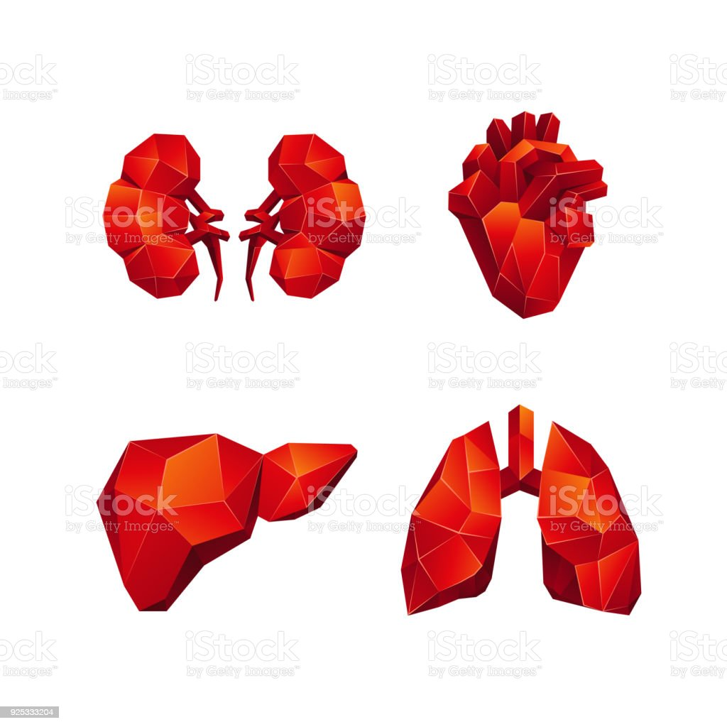 Red low poly human internal organs set on a black background. Abstract anatomy organ, such as the heart, lungs, liver and kidneys in 3D polygon style. vector art illustration
