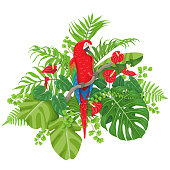 Red Macaw and Tropical Plants