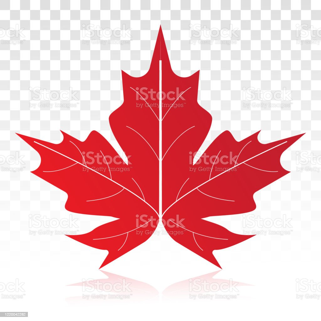 Red Maple Leaf Vector Flat Icon On A Transparent Background Stock Illustration Download Image Now Istock