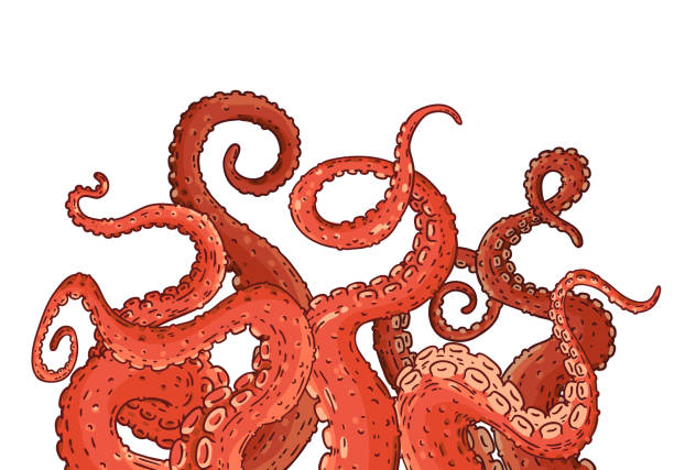 Red octopus tentacles reaching upwards Red octopus tentacles reaching upwards, squid like marine animal body parts protruding from out of frame, cut for food or frame design, cartoon sketch vector illustration isolated on white background cooking borders stock illustrations