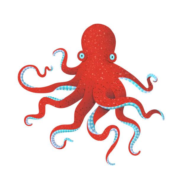 red octopus - octopus stock illustrations